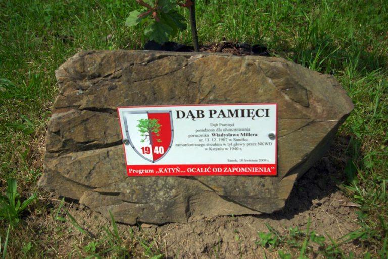 Kamień przy Dębie Pamięci honorującym Władysława Millera w Sanoku.